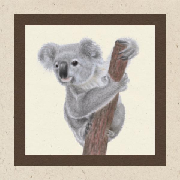 koala-karte02D603D9-D189-4402-754F-03A07B7E3494.png