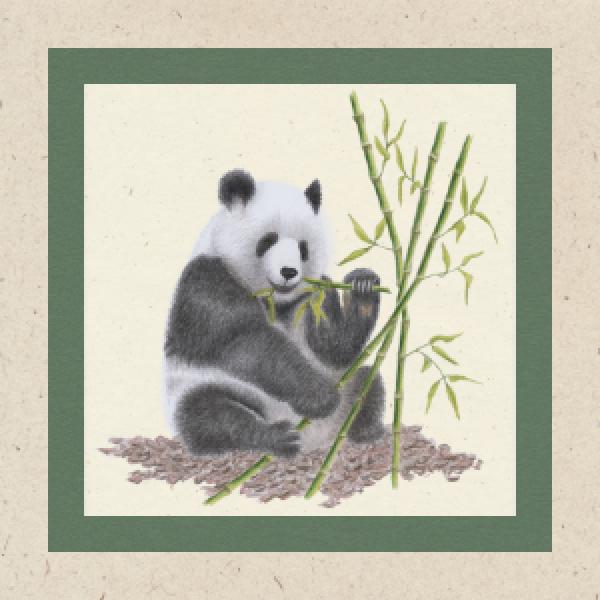 panda-karte-gruen-1FE4F56ED-0E5A-9A6B-F489-4FDE3E77DE8A.png